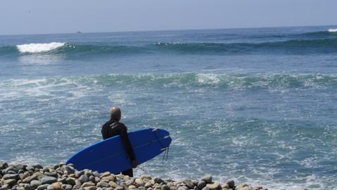 delfin surfer