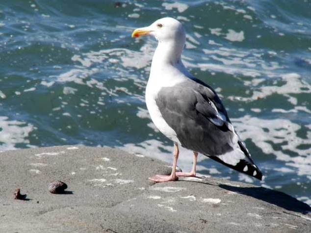 163-bird